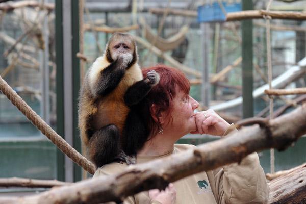 Kölner Zoo Geöffnet